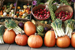 Four Fun Fall Festivities