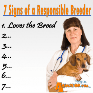 A responsible breeder begins by loving the breed.