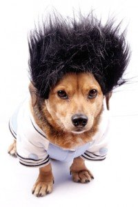 dog coat of hair problems