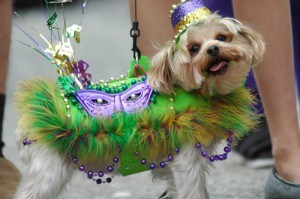 A Mardi Gras Parade for the Canines