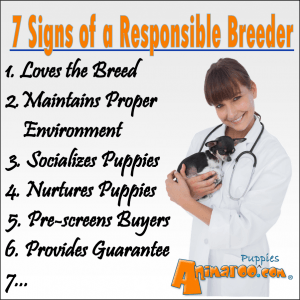 7 Signs of a Responsible Breeder