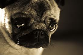 Separation Axiety in Dogs Can Lead to Whining