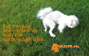 New studies suggest dogs align themselves according to the earth's axis to eliminate wastes