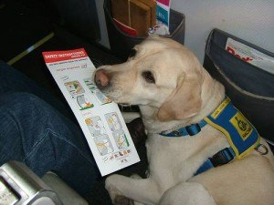 Increasing number of dogs on planes
