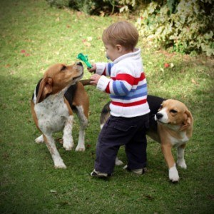 Dog playing with children safely supervised