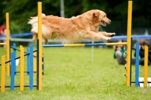 Do dogs need exercise every day?