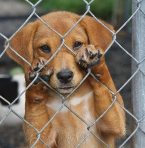 Puppy Mill Ban in Wellington, FL is a step in the right direction
