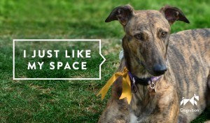 Dogs wear yellow ribbons to indicate they need space.