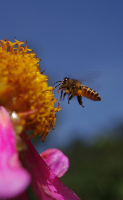 Bee products and our certified organic skin care