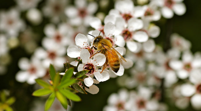 Why bees matter so darn much