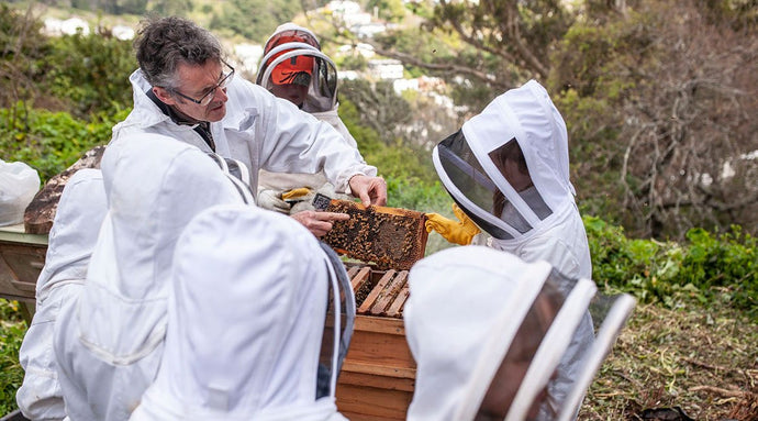 from hive, to garden to table: how we're supporting the trust's good work