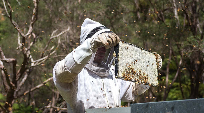 dear diary: what our beekeepers got up to in March