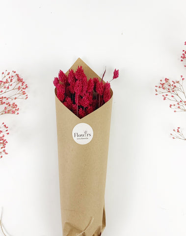 Phalaris Red - Flowrs.shop