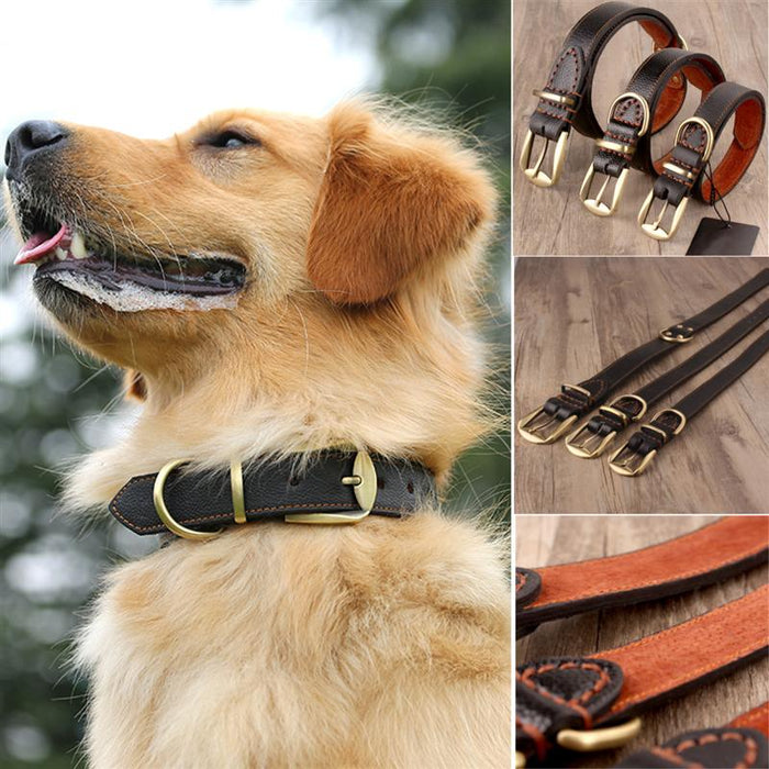 Dog Collar Real Hard Genuine Leather