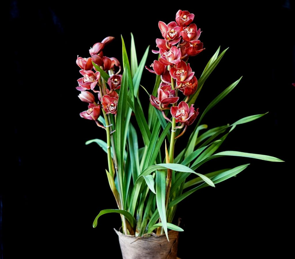 orchid from redfern flower shop