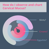How Do I Observe and Chart Cervical Mucus?