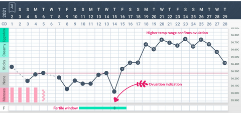 Tempdrop chart with ovulation identified