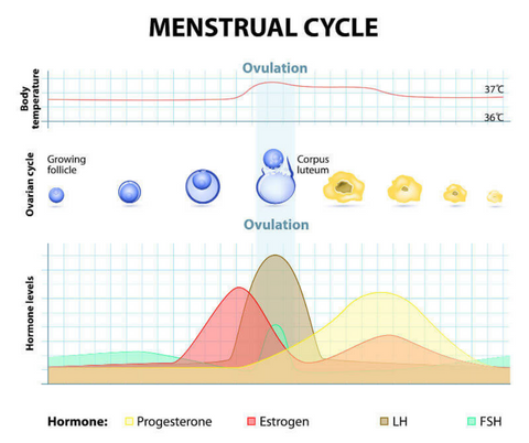how to keep track of basal body temperature during the menstrual cycle