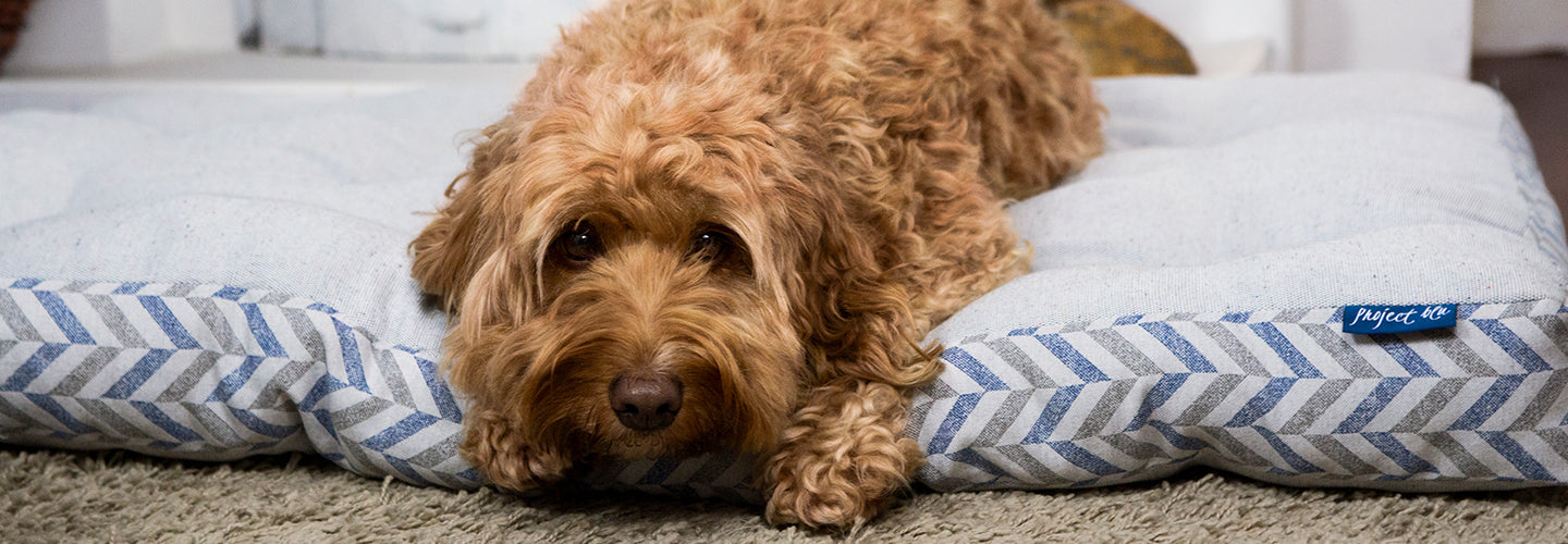 Pet Hygiene: Pet Bed Care and Cleaning