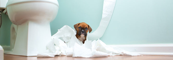How to Make Moving Home Less Stressful for Pets