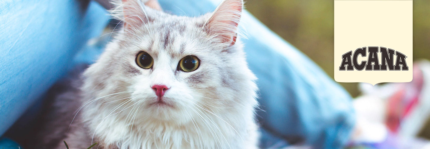 ACANA Cat Food: Nutrition They Need, Food They Love