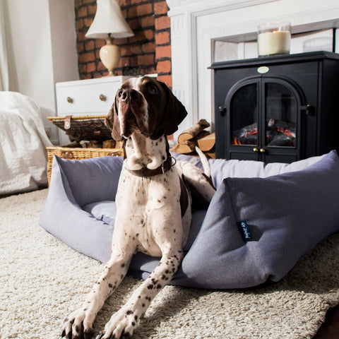 project blu dog bed