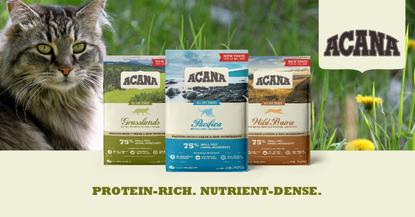 grain free acana cat food