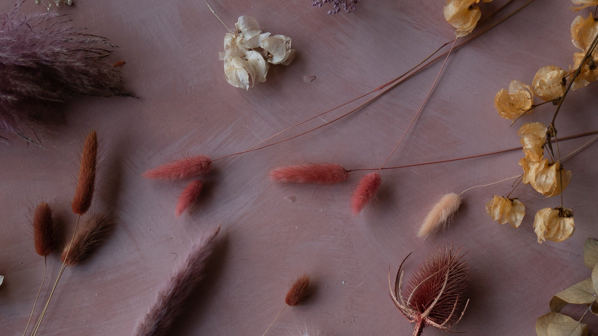 The Blume Introductory Guide to Dried Flowers