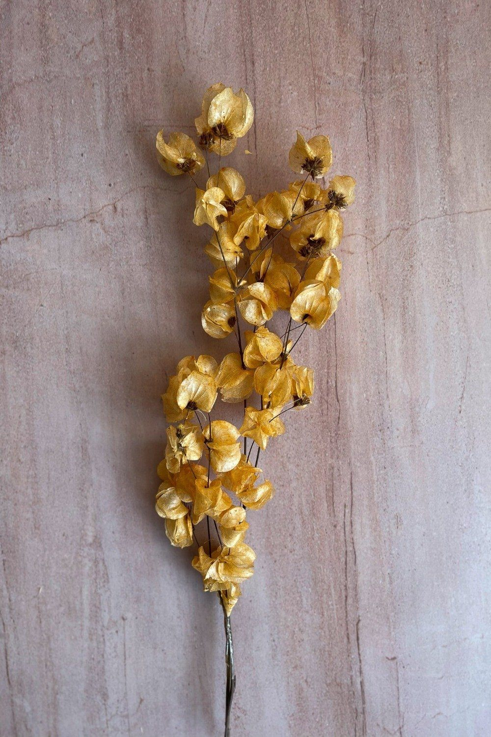 Dried Bougainvillea Bunch - Yellow Dried Flowers Blume