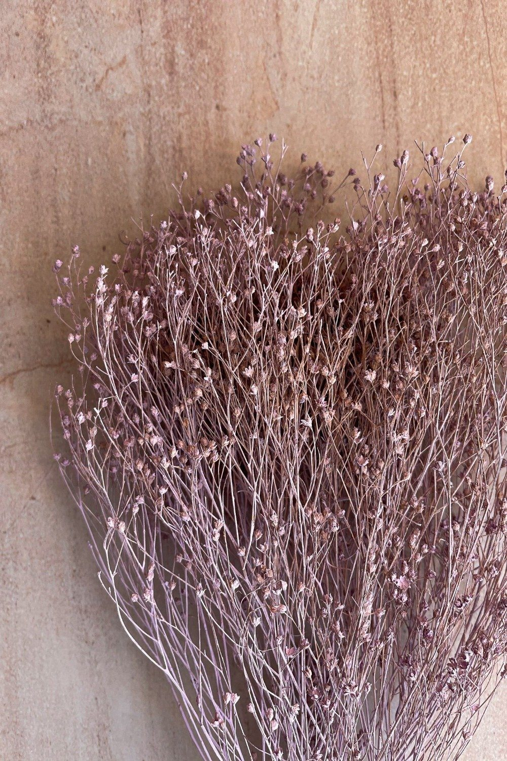 Dried Broom Bunch - Lilac Dried Flowers Blume