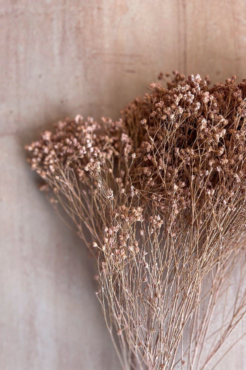 Dried Broom Bunch - Pink Dried Flowers Blume
