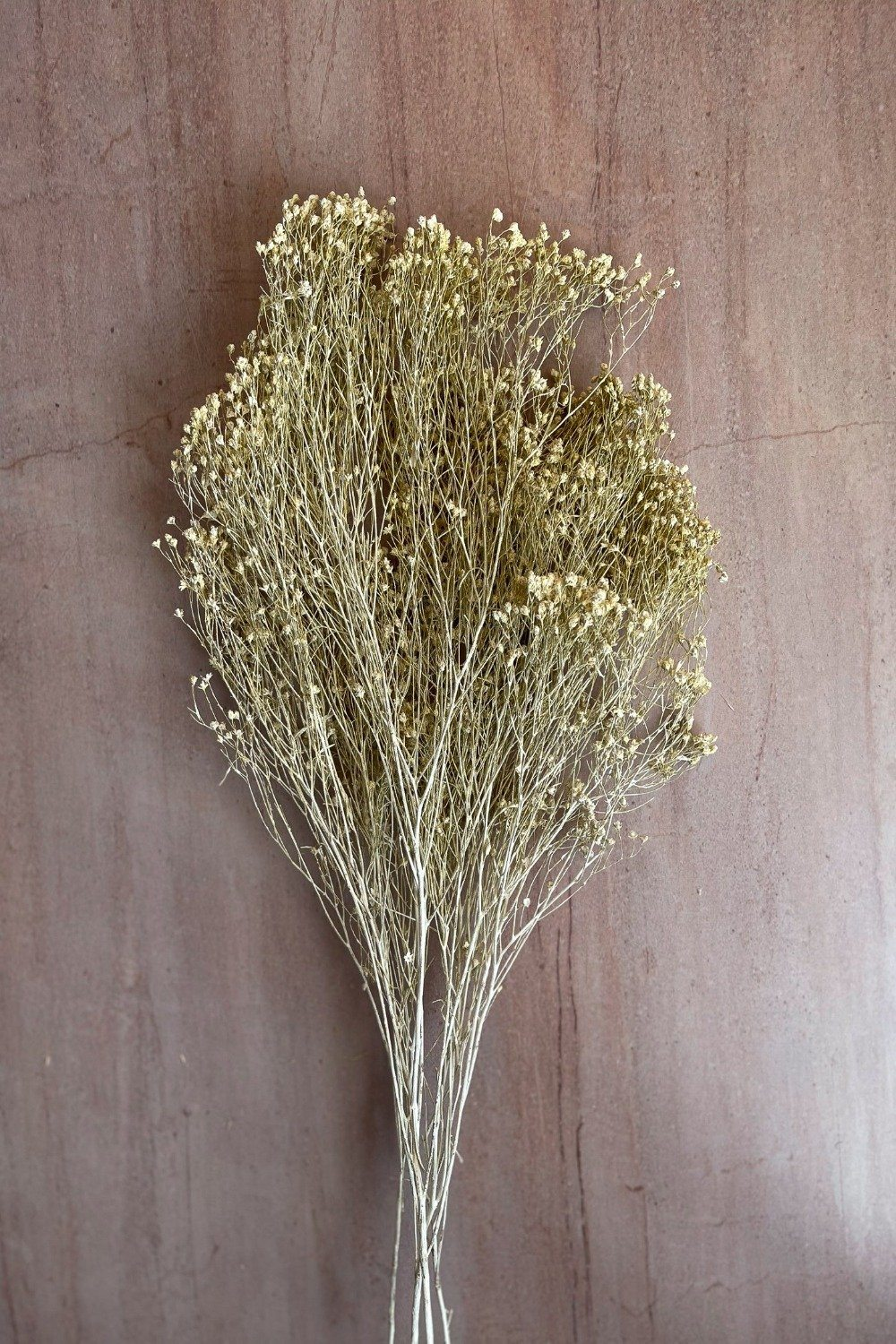 Dried Broom Bunch - White Dried Flowers Blume
