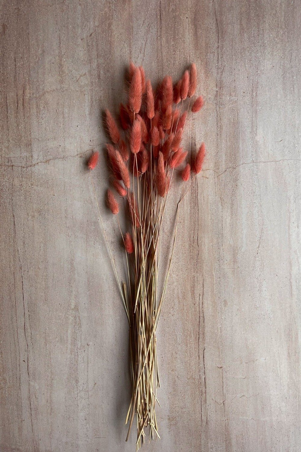 Dried Bunny Tails Bunch - Antique Pink Dried Flowers Blume