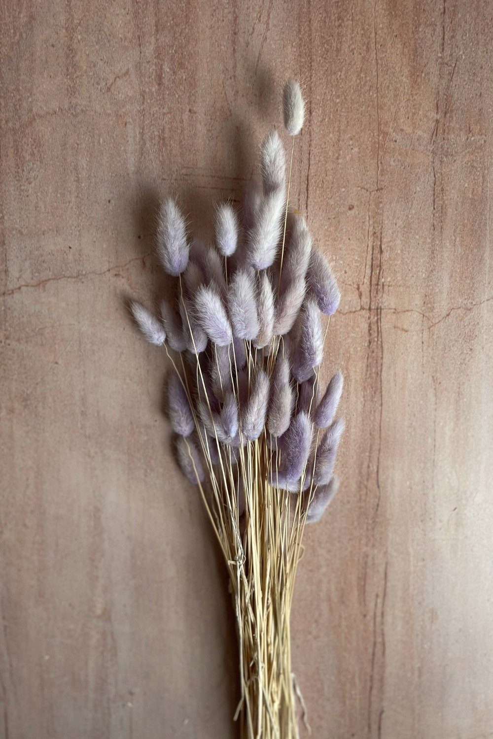 Dried Bunny Tails Bunch - Lilac Dried Flowers Blume