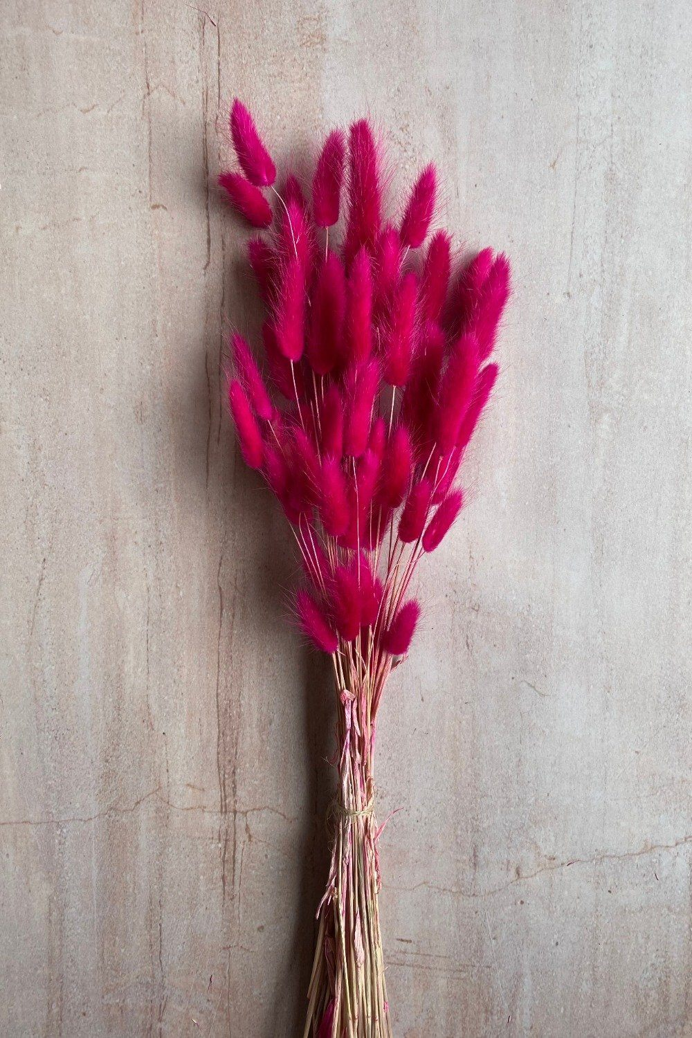 Dried Hot Pink Bunny Tails Bunch Dried Flowers Blume