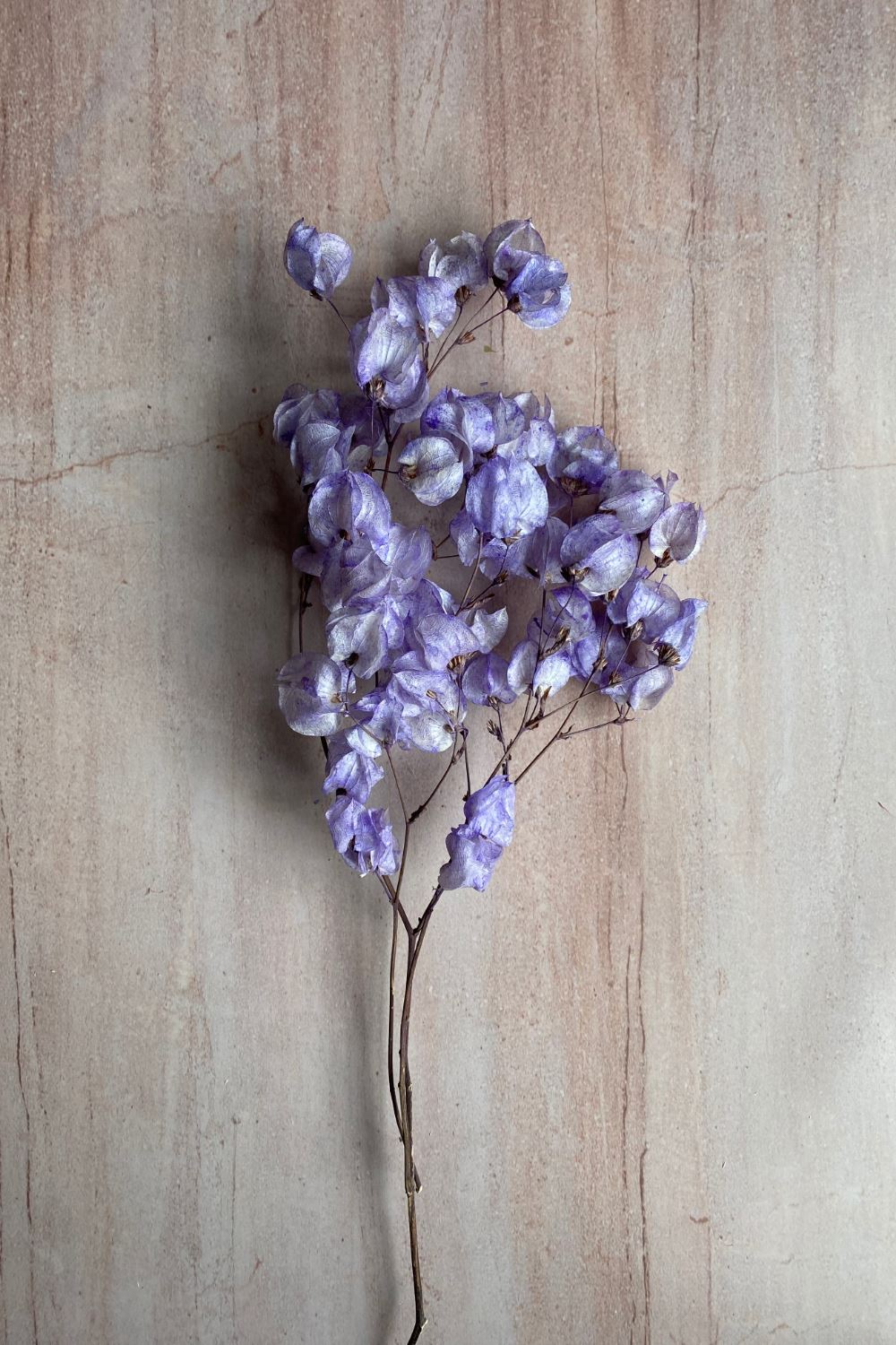 Dried Lilac Bougainvillea Bunch Dried Flowers Blume