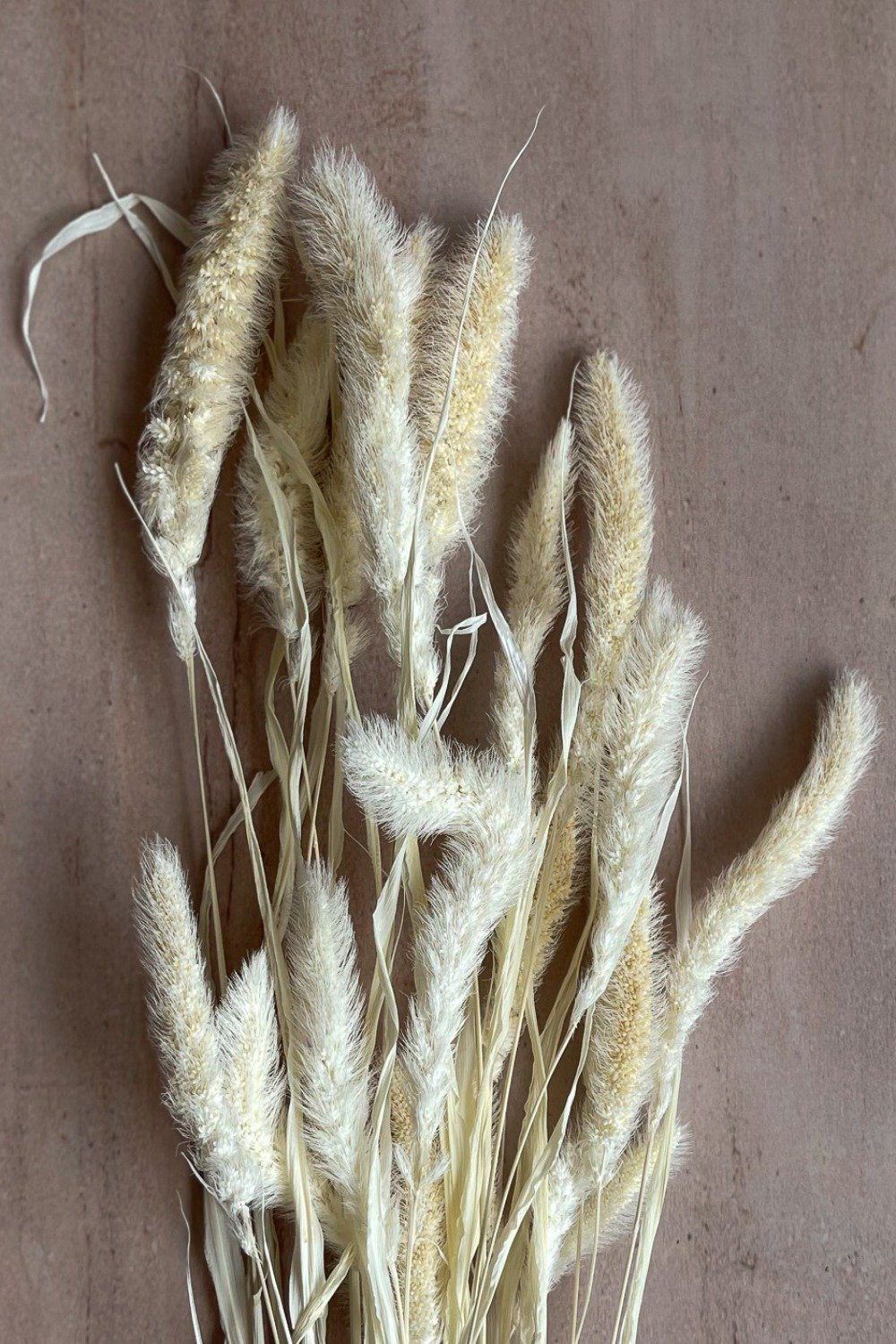 Dried Setaria Bunch - White Dried Flowers Blume