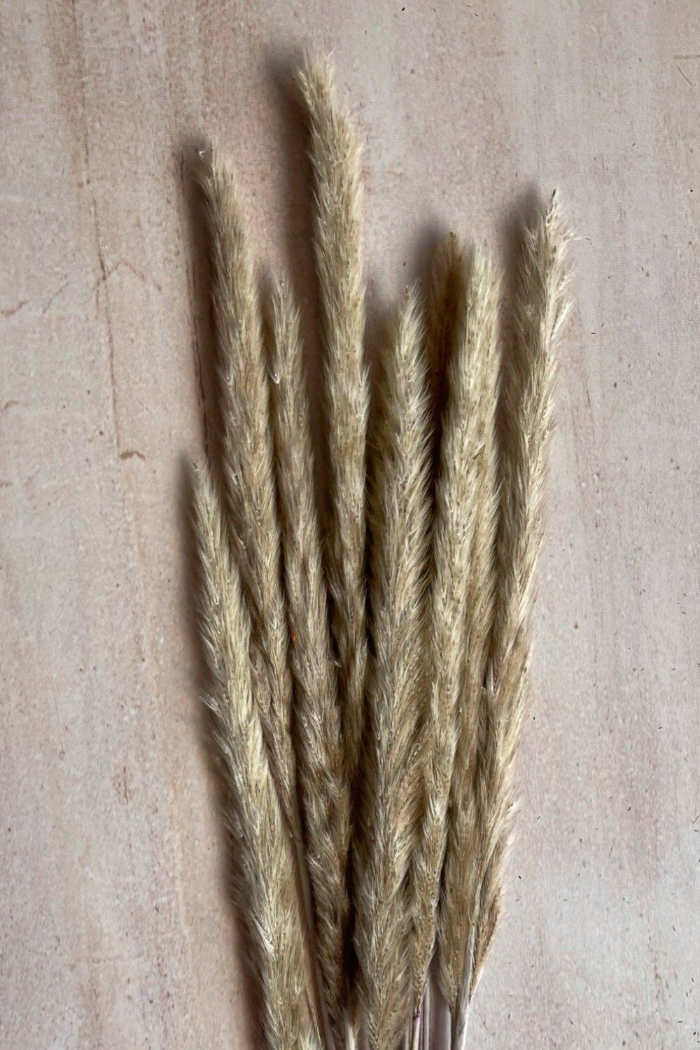 Dried Small Pampas Stems - Natural Dried Flowers Blume