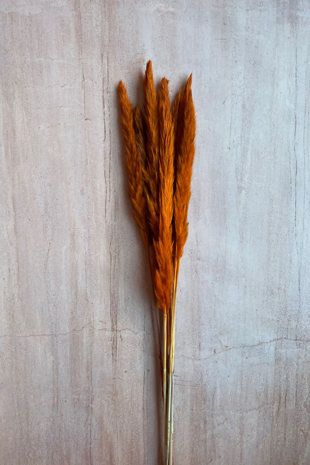 Dried Small Pampas Bunch - Orange Dried Flowers Blume