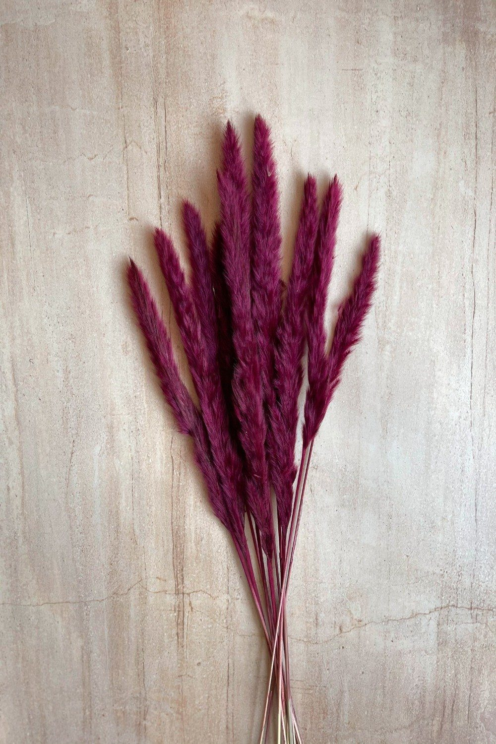 Dried Small Pampas Stems - Burgundy Dried Flowers Blume