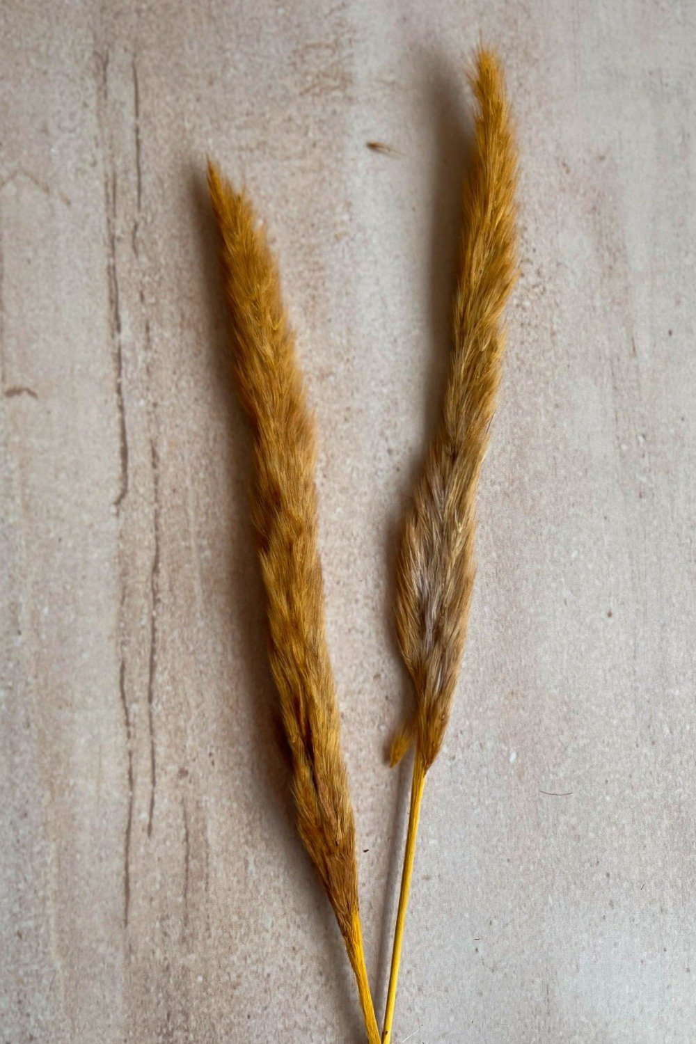 Dried Small Pampas Stems - Burnt Orange Dried Flowers Blume
