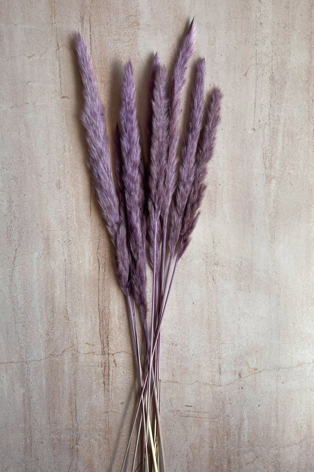 Dried Small Pampas Stems - Purple Dried Flowers Blume