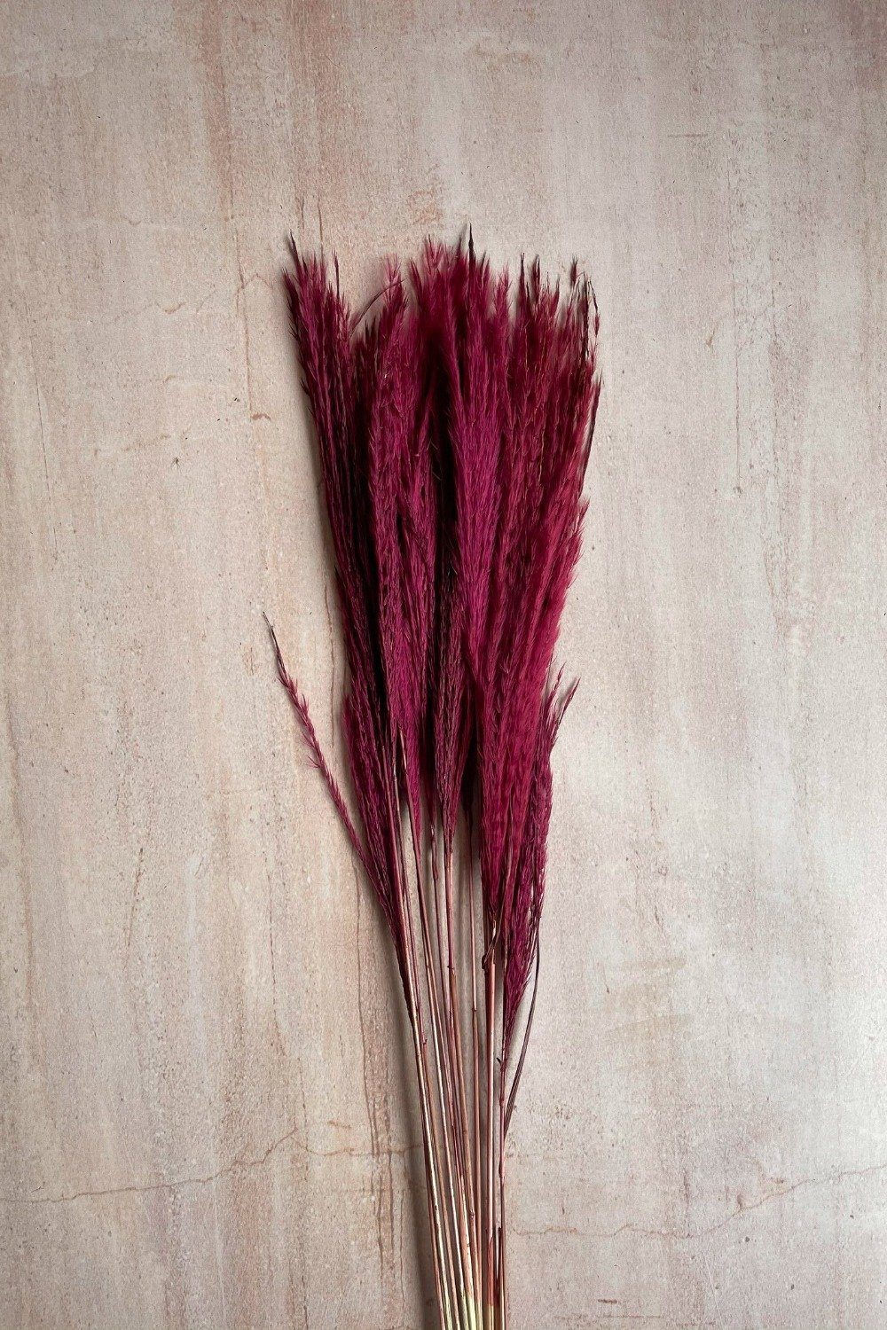 Dried Stipa Grass Mini Bunch - Bordeaux Dried Flowers Blume
