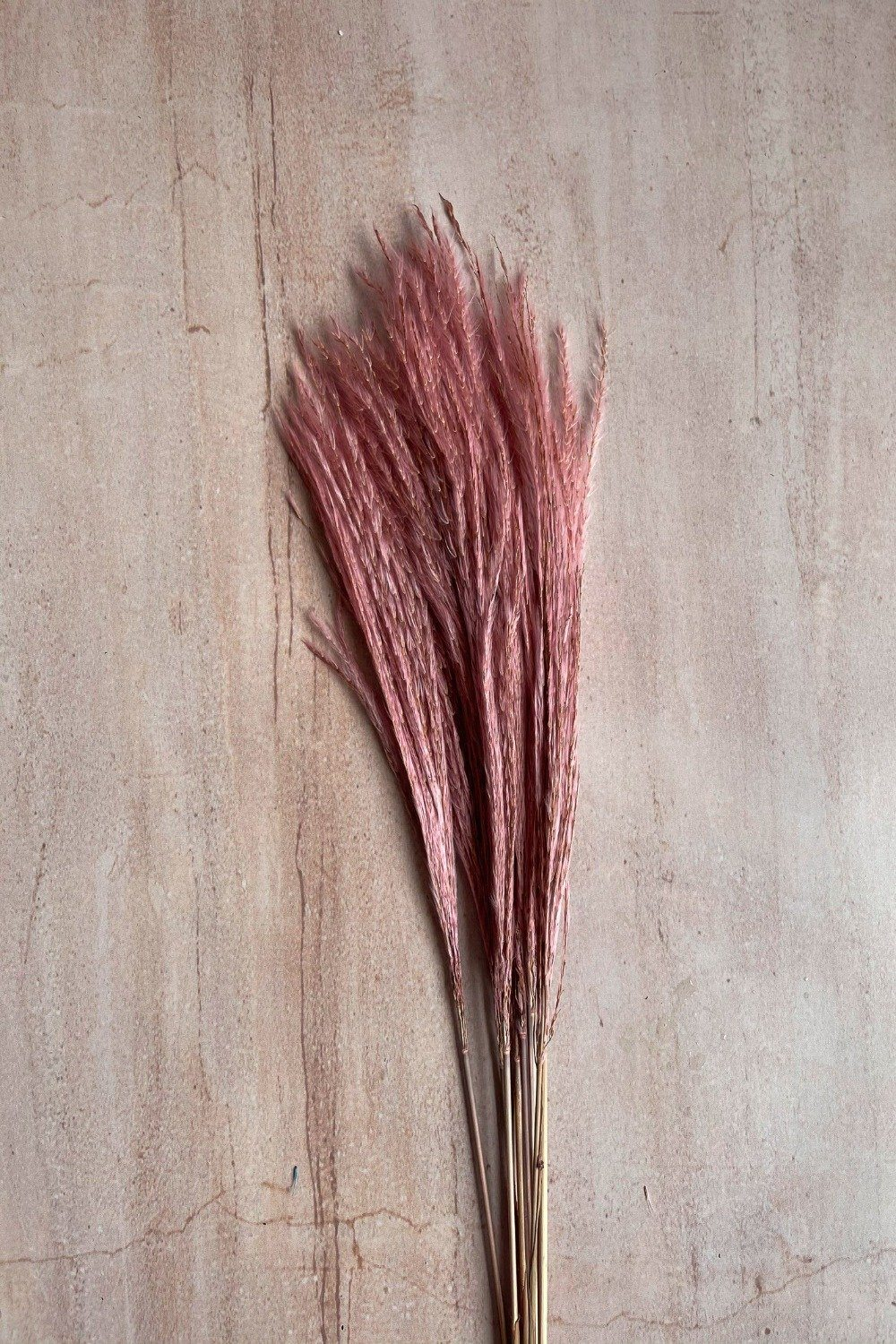 Dried Stipa Grass Mini Bunch - Light Pink Dried Flowers Blume