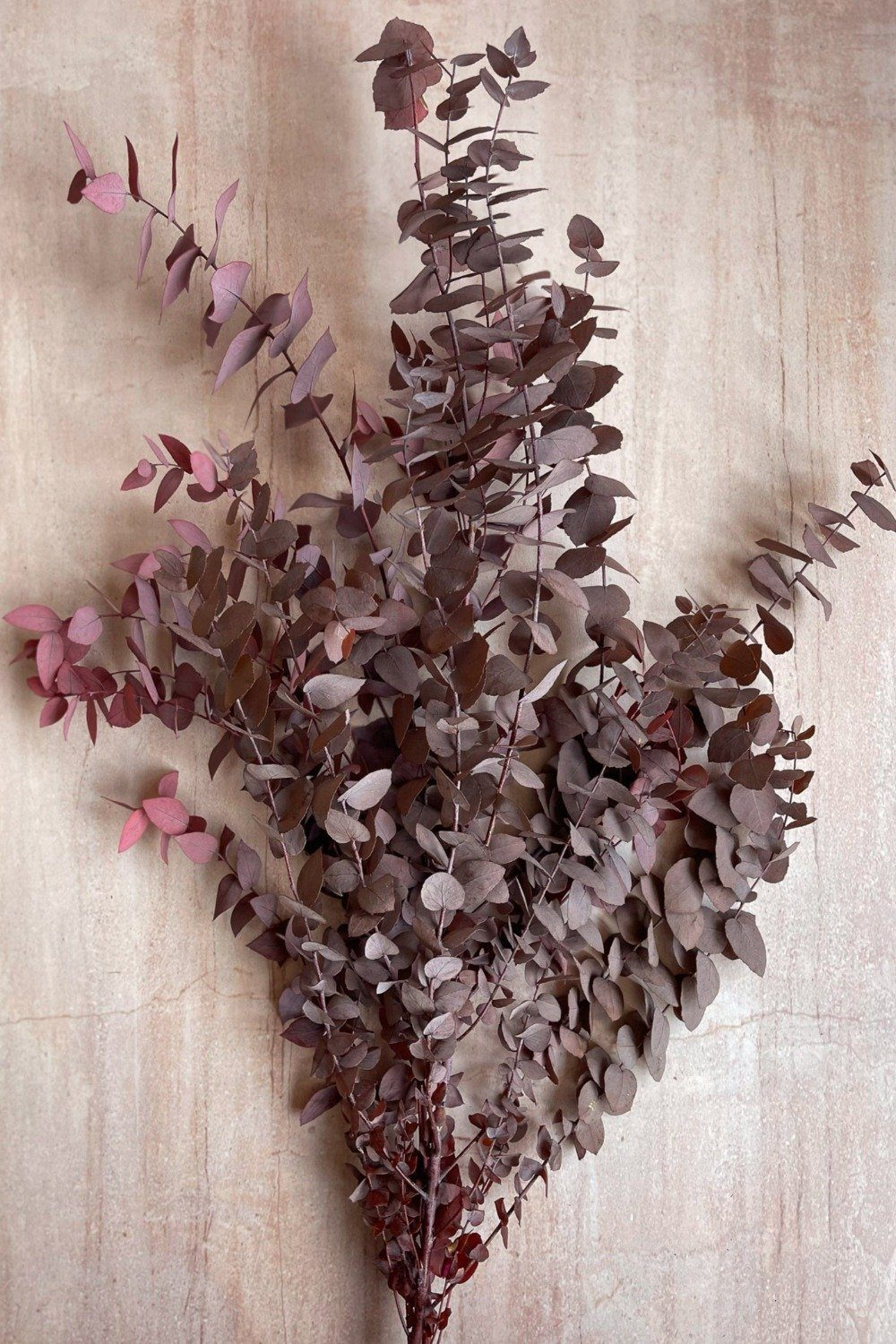 Preserved Eucalyptus Bunch - Berry Red Dried Flowers Blume