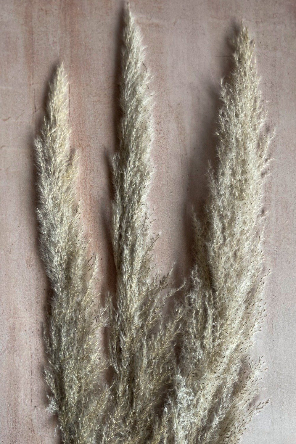Tall Feather Pampas Bunch - Natural/Grey Dried Flowers Blume