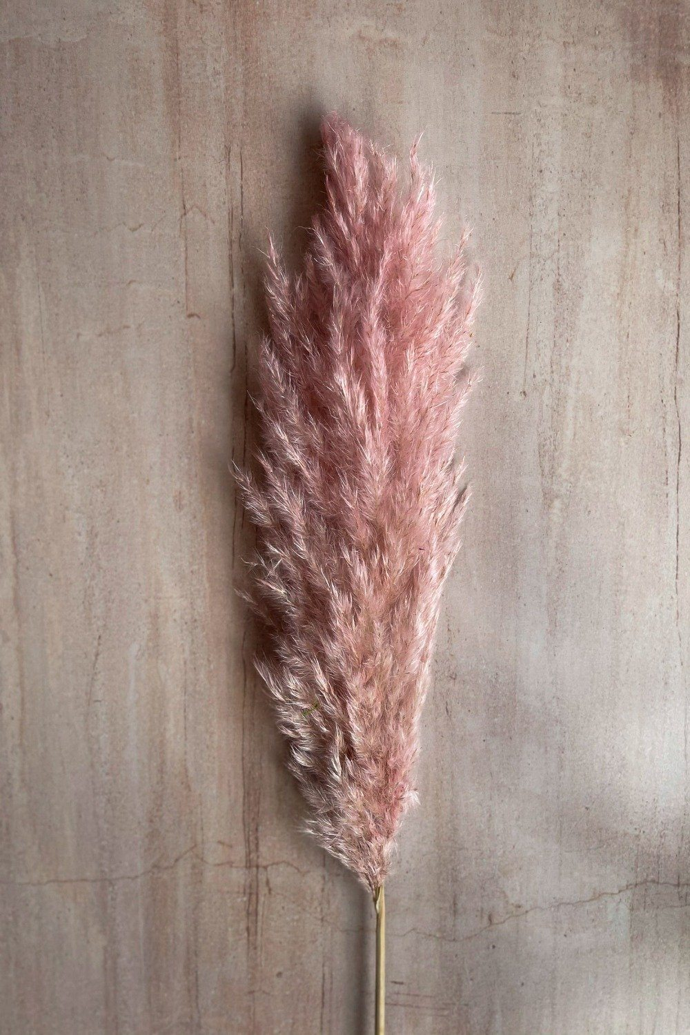 Tall Plum Dried Pampas Grass Stem - Pink Dried Flowers Blume