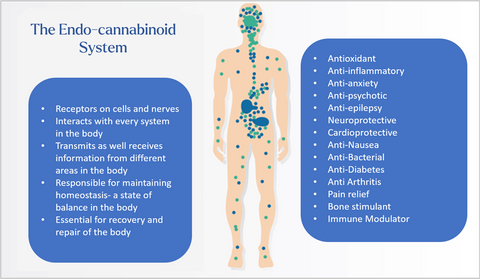 The Endo-cannabinoid system