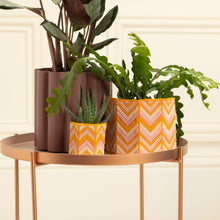 Load image into Gallery viewer, Spring collection | Bargello midi planter kit