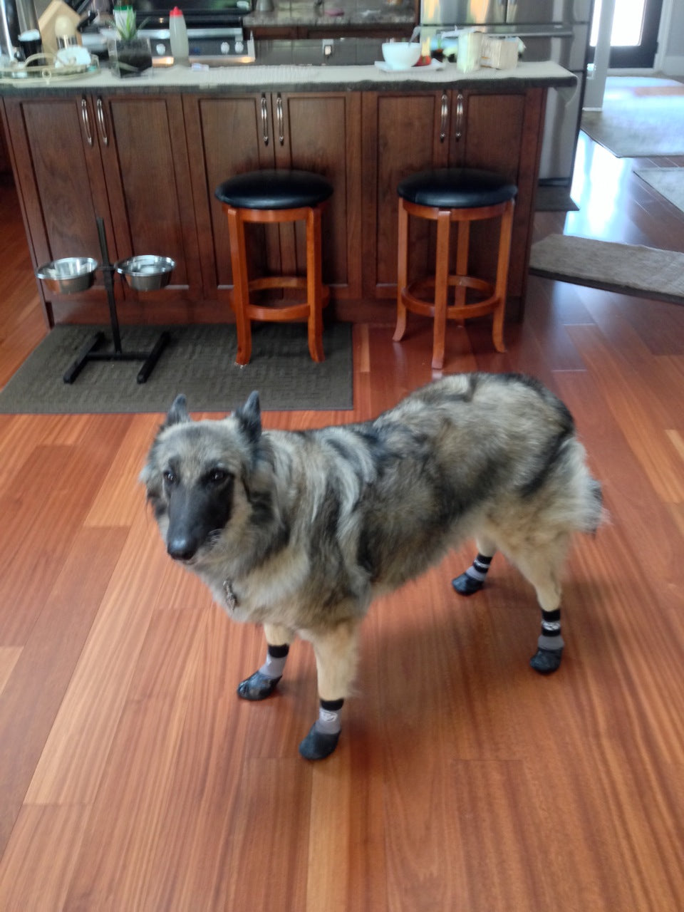 Dog socks for hardwood floors floor matttroy for Hardwood floors with dogs